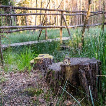 am Saugartenmoor Dresdner Heide