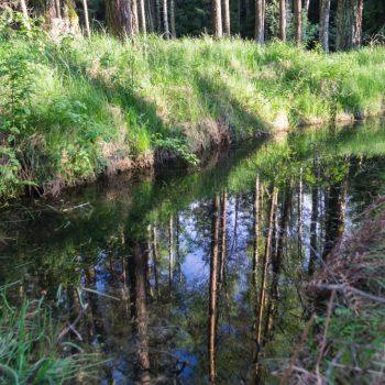 Spiegelung im Wasser, Saugartenmoor Dresdner Heide
