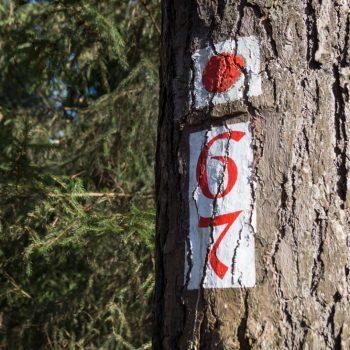 Alte Sechs und Alte Sieben, historische Wegzeichen in der Dresdner Heide