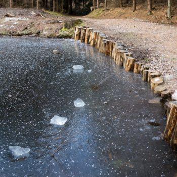 Gewässer am Wanderweg Alte Sechs in der Dresdner Heide