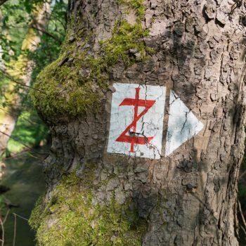 Diebsteig, historisches Wegzeichen in der Dresdner Heide