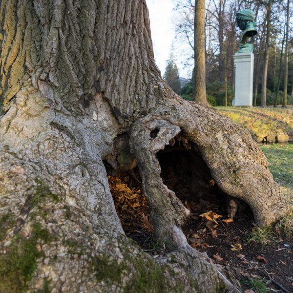 Baumwurzel und Bronze der Juno Ludovisi auf der Insel, Englischer Garten Pillnitz