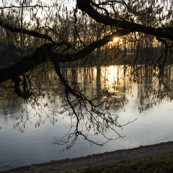 goldenes Abendlicht am Elbufer bei Schloss Pillnitz