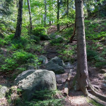 Abstieg zum Pionierweg und in Richtung Rathen