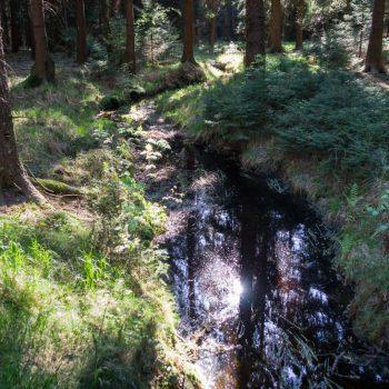 Schwarzwasser in der Dresdner Heide, Abzweig von der Brille auf einen unwegsamen Pfad