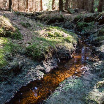 Schwarzwasser in der Dresdner Heide, bei Lichteinfall rotbraune Färbung des eisenhaltigen Wassers