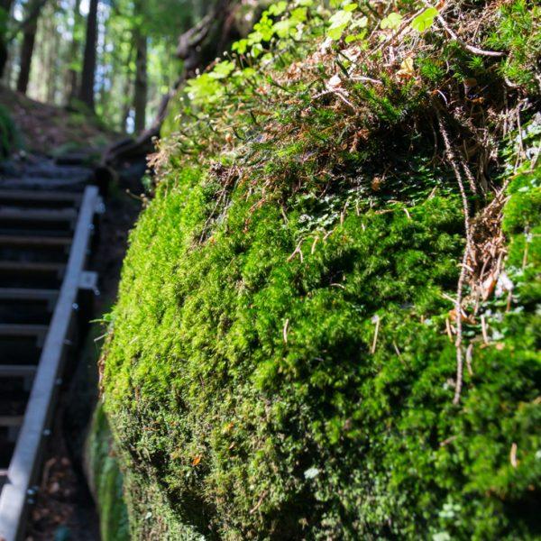 Aufstieg Spitzsteinschlüchte, Treppen und mit Moos benetzte Steine
