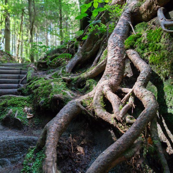Aufstieg Spitzsteinschlüchte, Treppenstufen und Wurzel