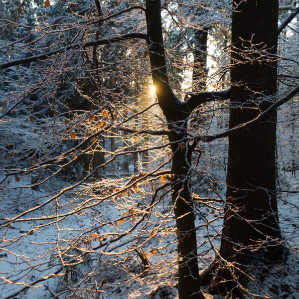Abendlicht in der winterlichen Dresdner Heide