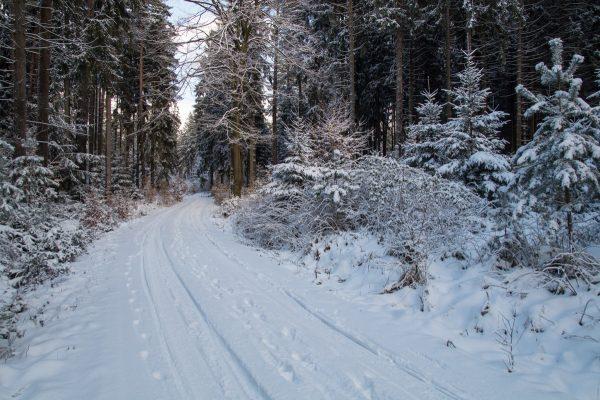 Unterwegs auf dem Weißiger Weg im Winter, Dresdner Heide