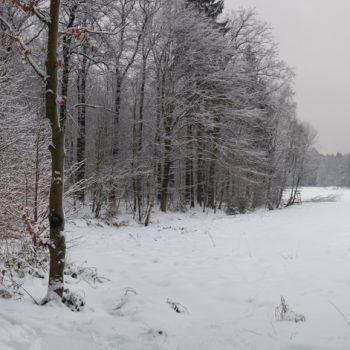 Blick von der Alten Vier auf die schneebedeckte Tanzzipfelwiese, Panorama Dresdner Heide