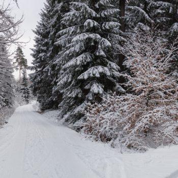 Winterwald als Panorama, Kreuzung an der Gabel, Dresdner Heide