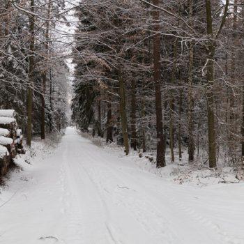 Kreuzung von HB-Weg und Alter Eins, Winterwald als Panorama, Dresdner Heide
