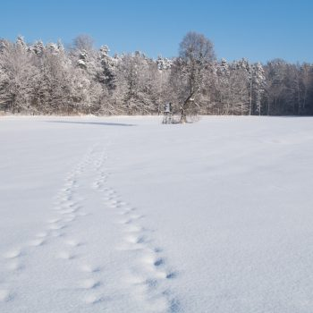Vom Schnee bedeckte Tanzzipfelwiese, Dresdner Heide