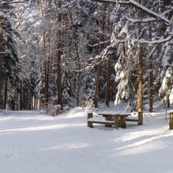 Winterwald als Panorama, Kreuzung von Alter Eins, Neuen Weg und Weißiger Weg