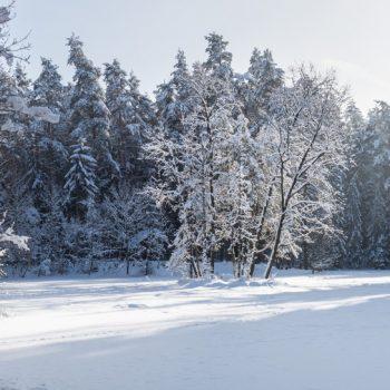 Stausee im Winter, Dresdner Heide, Panorama
