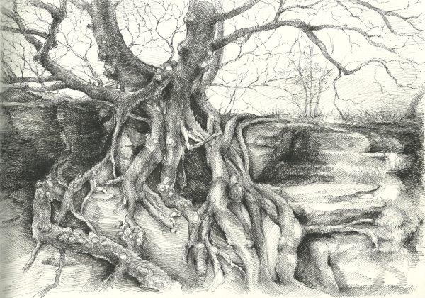 Wurzel | Tusche auf Papier | 295 x 208 mm | 2016