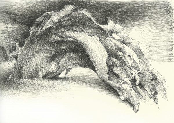 Wurzel | Tusche auf Papier | 295 x 208 mm | 2015