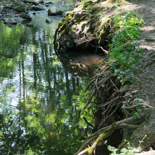 Spiegelung am Ufer des Zschonerbachs, Wandern in Dresden