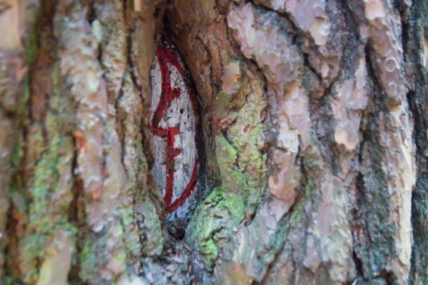 in Holz geschnittener Halbmond, historisches Wegzeichen in der Dresdner Heide