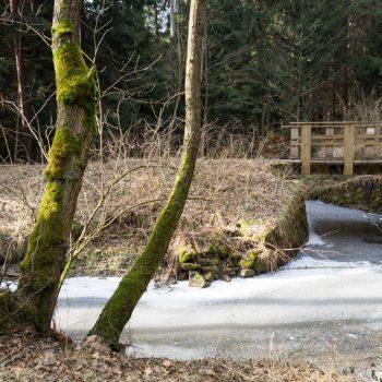 Baumgruppe und Holzbrücke an der Prießnitz, Bischofsweg in der Dresdner Heide