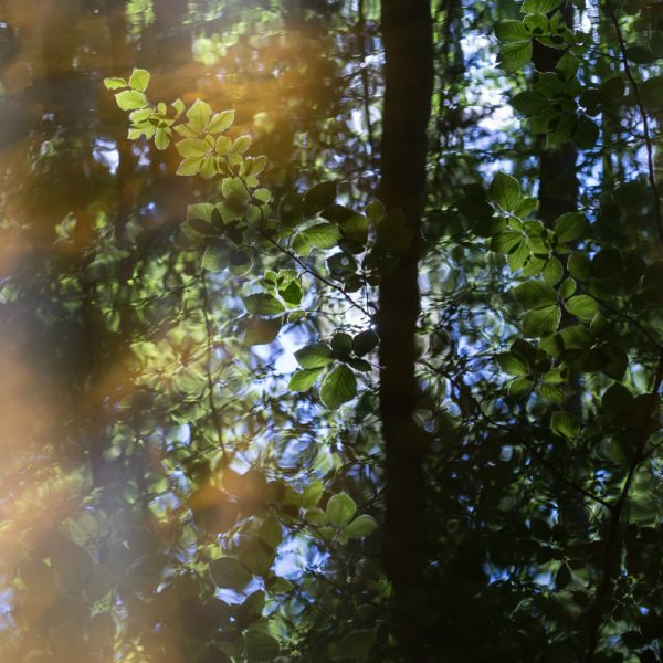 Grüne Blätter im Wasser, Dresdner Heide