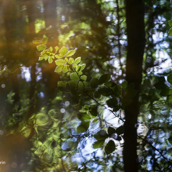 Sommerliche Spiegelung im Wald 2, Dresdner Heide