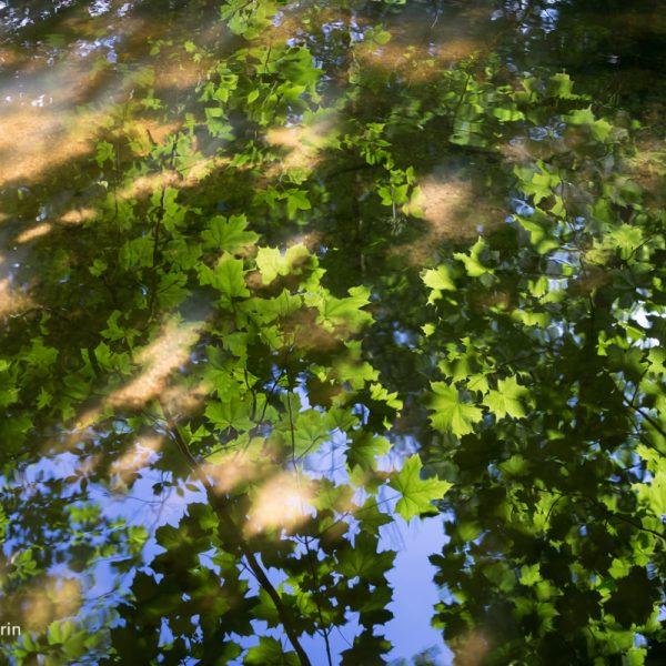 Spiegelung am Flussufer der Prießnitz, Dresdner Heide
