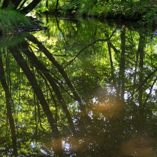 Spiegelung in der Großen Röder im Hüttertal