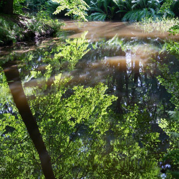 Spiegelung im Wasser, Schlosspark Hermsdorf