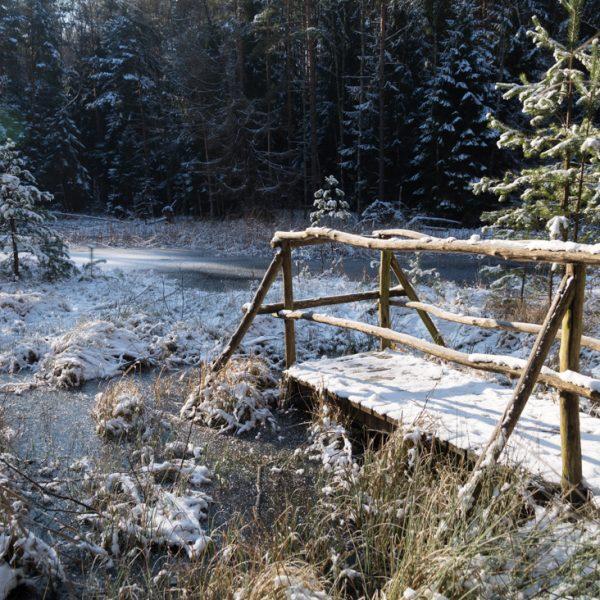das Saugartenmoor im Winter, ein Naturdenkmal in der Dresdner Heide