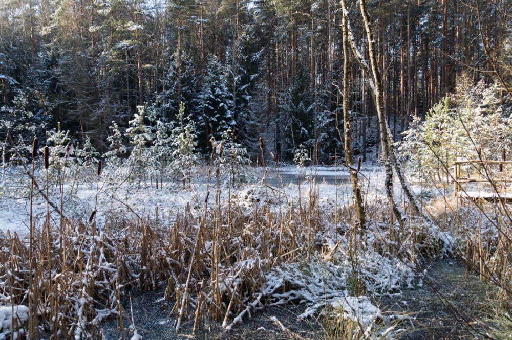 das Saugartenmoor nahe dem Dresdner Saugarten in der Dresdner Heide