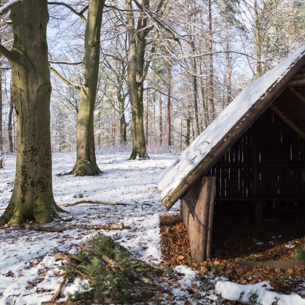 Schutzhütte am Diebsteig, Dresdner Heide im Winter